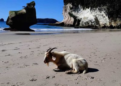 Goat_Catherdal_Cove_2